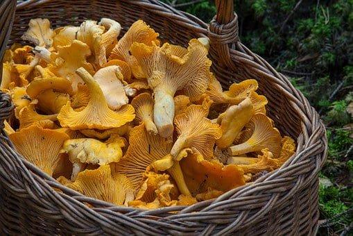 Herbst Pilze